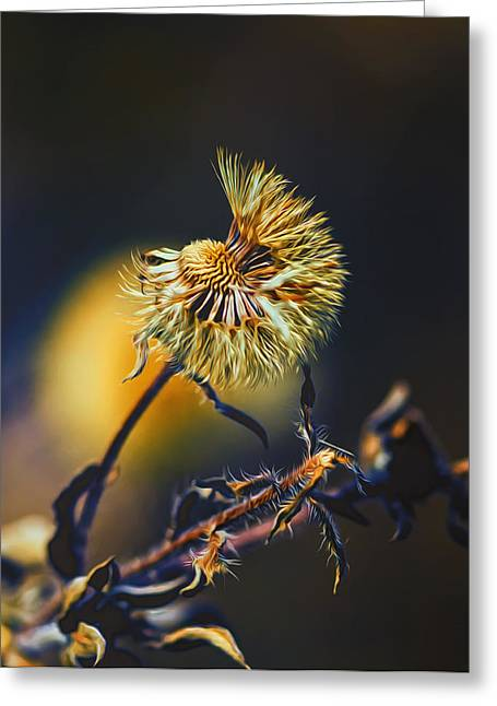 Dying Nature Glow Greeting Card by Bill Tiepelman