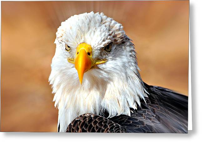 Eagle 21 Greeting Card by Marty Koch