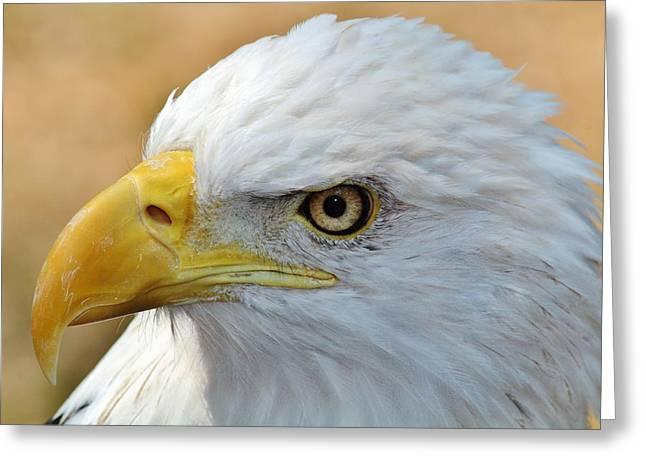 Eagle Eye 2 Greeting Card by Alexander Spahn