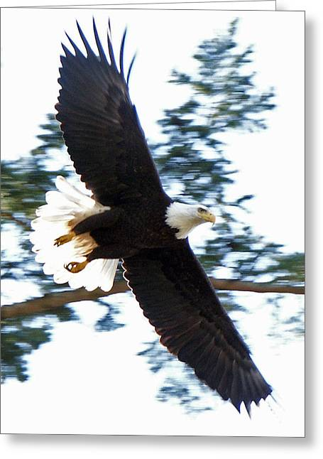 Eagle Eye Greeting Card by David Zinkand