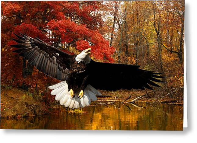 Greeting Card featuring the photograph Eagle In Autumn Splendor by Randall Branham