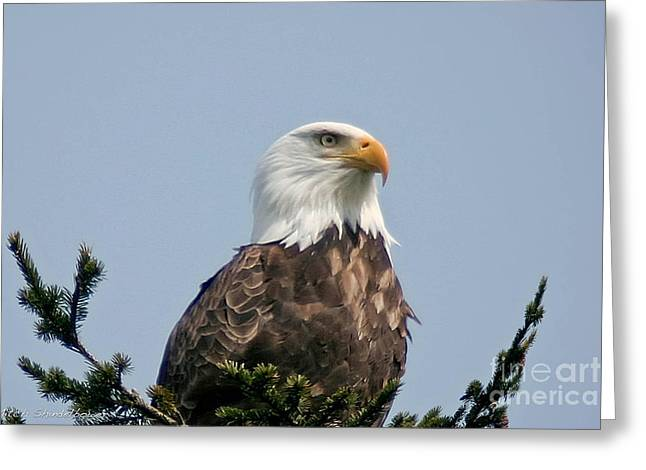 Greeting Card featuring the photograph Eagle  by Mitch Shindelbower