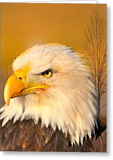 Eagle On Guard Greeting Card by Marty Koch