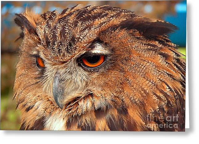 Eagle Owl Greeting Card by Graham Taylor