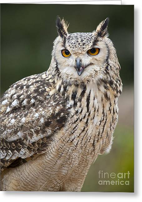 Eagle Owl II Greeting Card