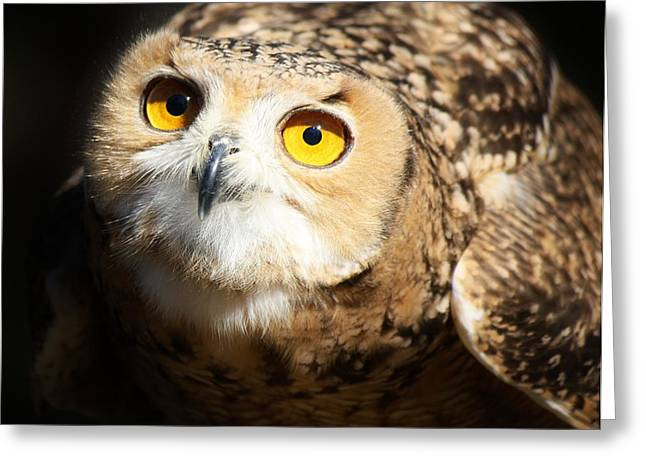 Eagle Owl Greeting Card by Paulette Thomas