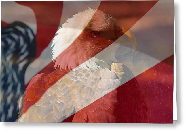Eagle Greeting Card by Rebecca Frank