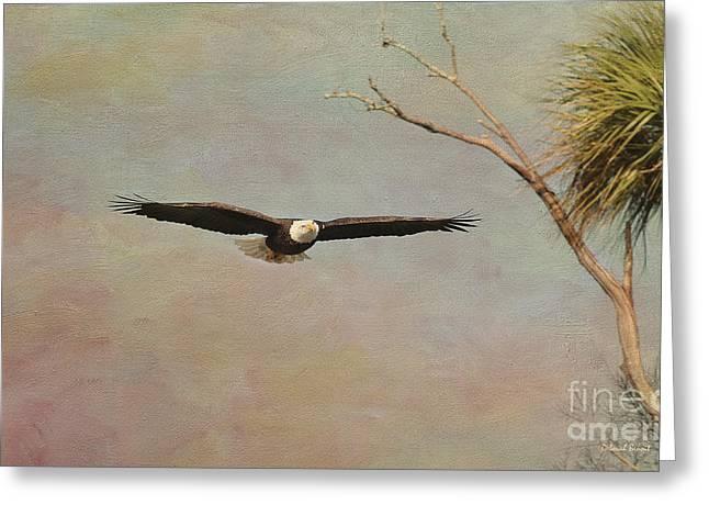 Eagle Soft Glide Greeting Card by Deborah Benoit