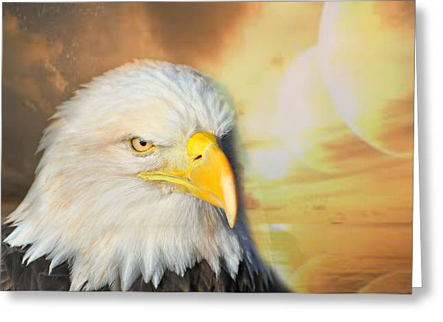 Eagle Sun Greeting Card by Marty Koch