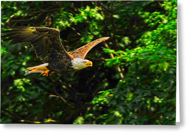 Greeting Card featuring the photograph Eagle Taking Lunch To Her Babies by Randall Branham