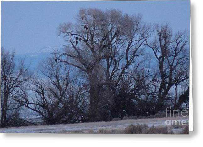 Eagle Tree Greeting Card by David Bearden