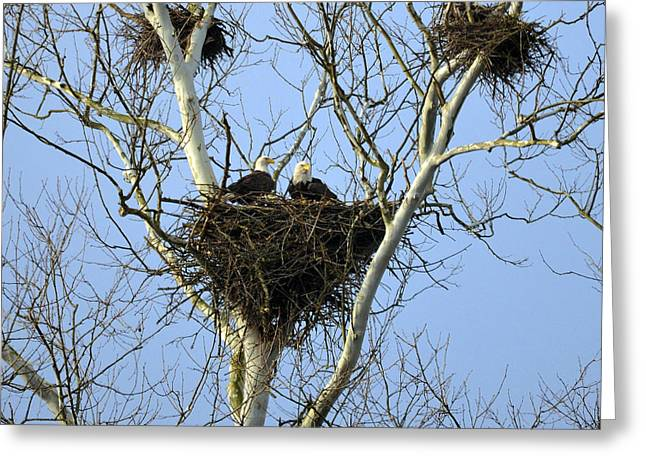 Greeting Card featuring the photograph Eagles Lair by Brian Stevens