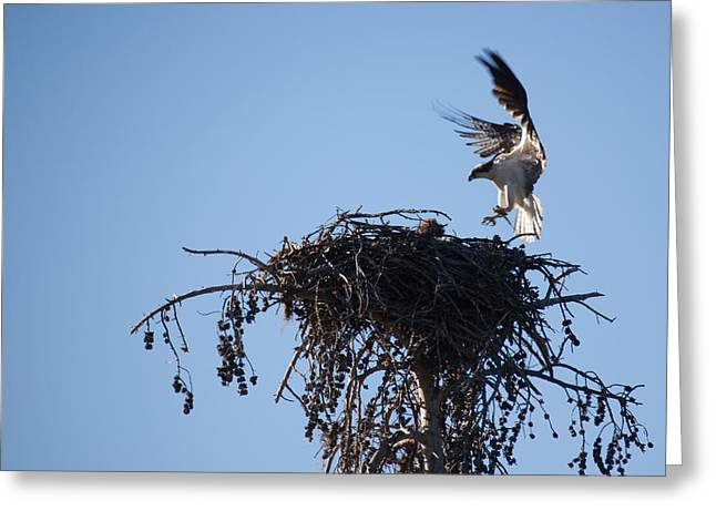 Eagle's Nest Greeting Card by Ralf Kaiser