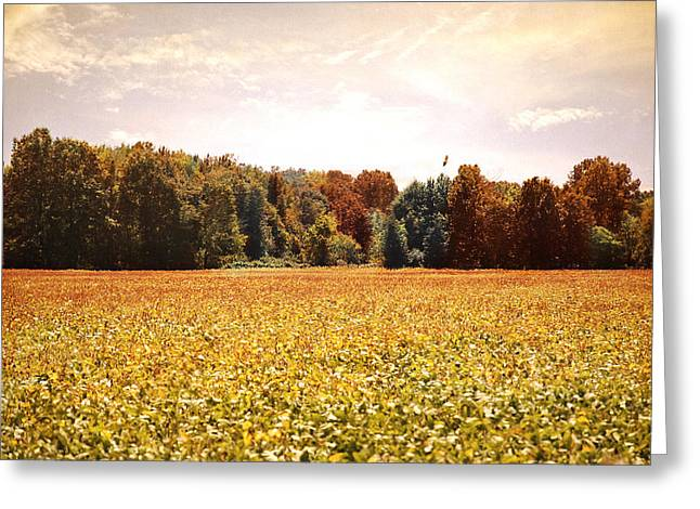 Early Autumn Harvest Landscape Greeting Card by Jai Johnson