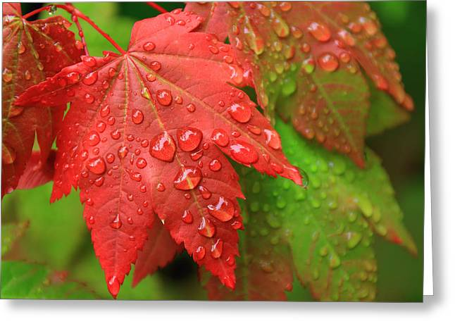 Early Autumn Greeting Card by Lee Amerson
