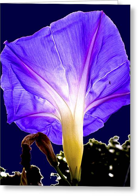 Early Morning Glory Greeting Card by Roy Foos