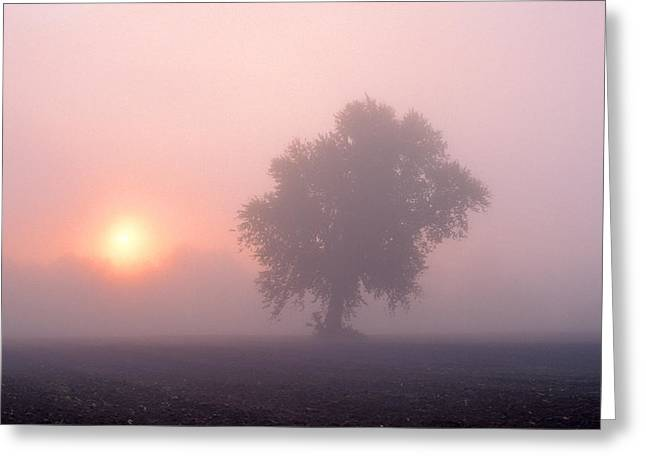 Early Morning Mist Greeting Card by Larry Landolfi