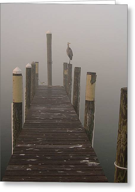 Early Morning On The Dock Greeting Card by Dorothy Cunningham