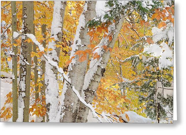 Early Snowfall Greeting Card by Gerald Hiam