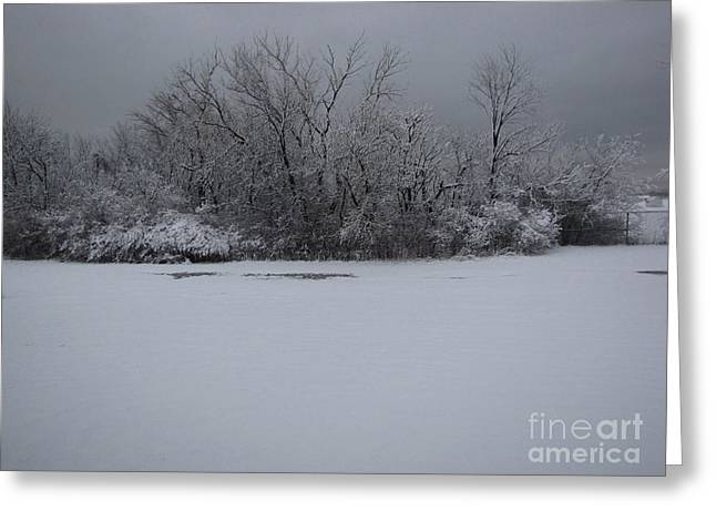Early Spring Snow Fall Greeting Card by Cedric Hampton