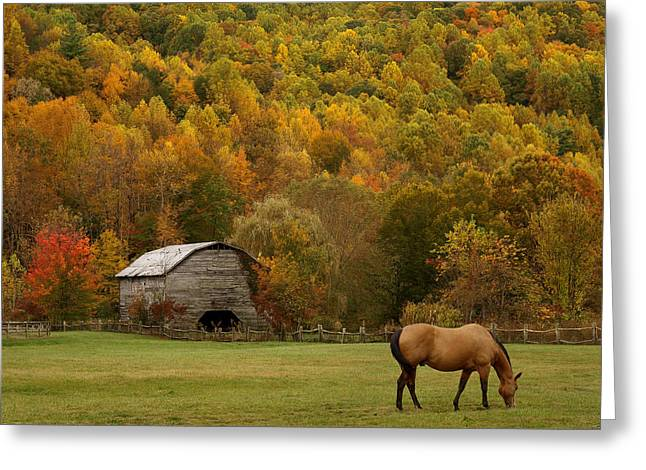 Ease Into Autumn Greeting Card by J K York