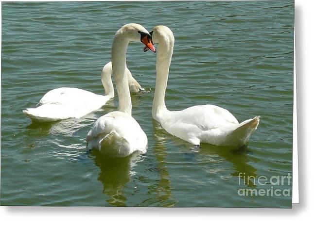 Easter Swans Greeting Card by Alisa Tek