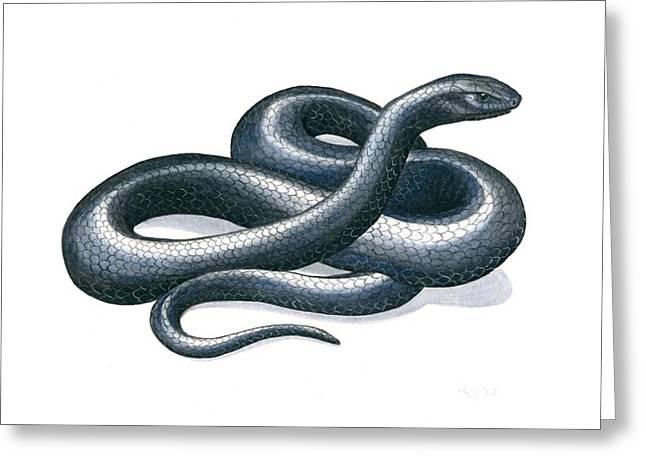 Eastern Indigo Snake Greeting Card by Anna Bronwyn Foley