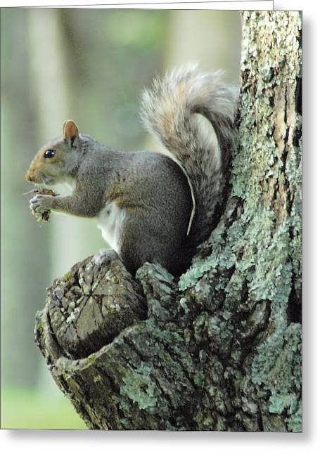 Eating Safely Greeting Card by