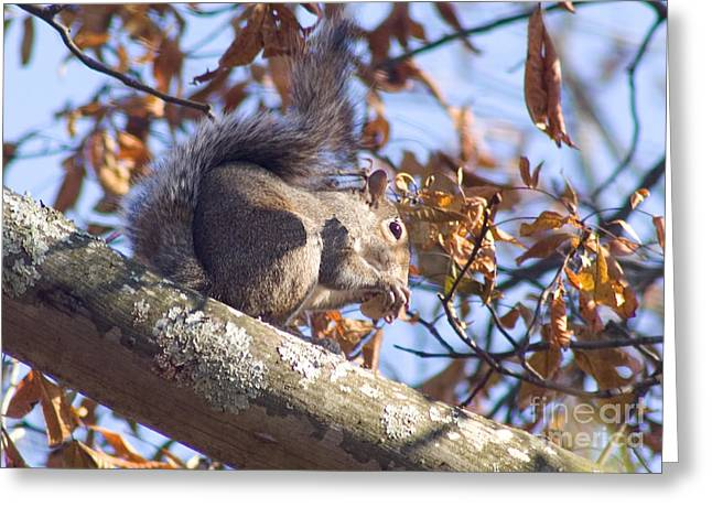 Greeting Card featuring the photograph Eating Squirrel by Michael Waters