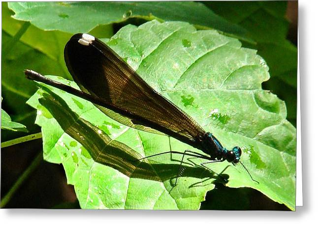 Ebony Jewelwing Damselfly II Greeting Card by Bruce W Krucke