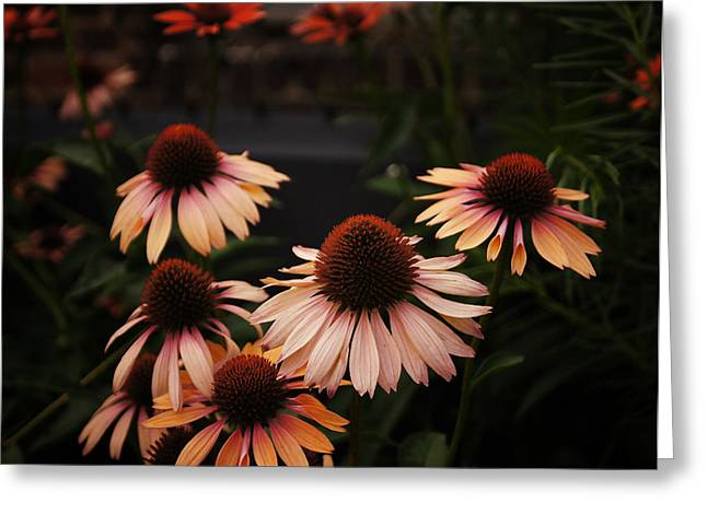 Echinacea Flowers Along The High Line Park - New York City Greeting Card by Vivienne Gucwa