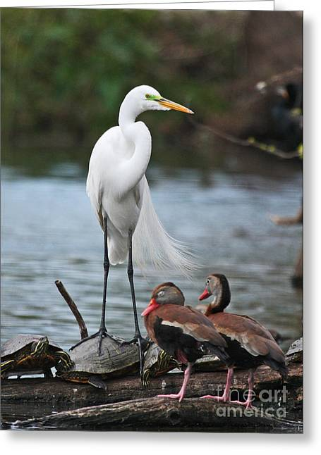 Greeting Card featuring the photograph Egret - Best Friends by Luana K Perez