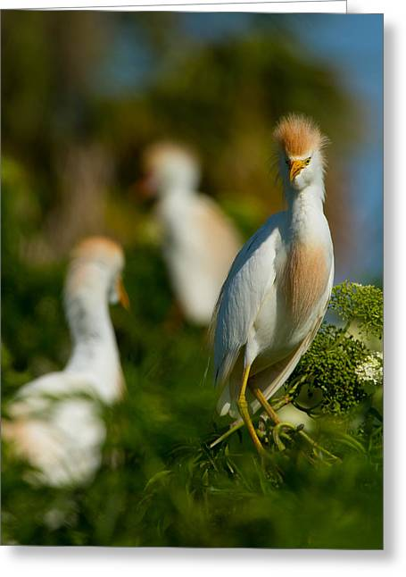 Egret And Company Greeting Card by Andres Leon