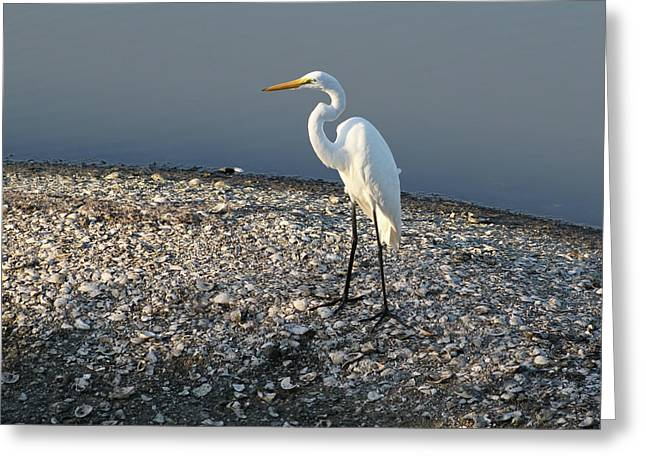 Egret At Huntington Greeting Card