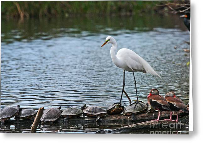 Egret Bird - Supporting Friends Greeting Card