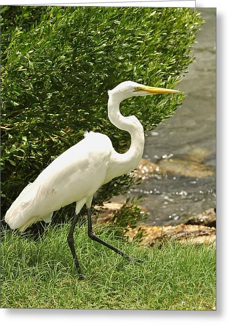 Greeting Card featuring the photograph Egret By The Bay by Rick Frost