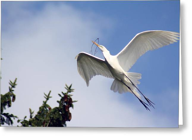 Egret Carrying Stick Greeting Card