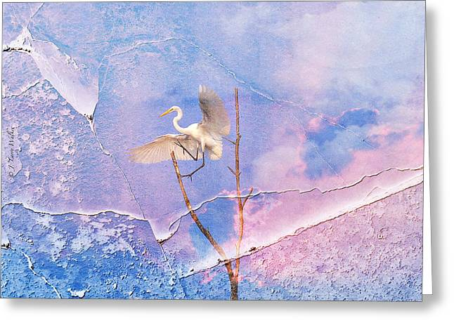 Egret Coming In For Landing Greeting Card