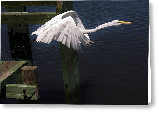 Egret Coming Off The Block Greeting Card by Paulette Thomas