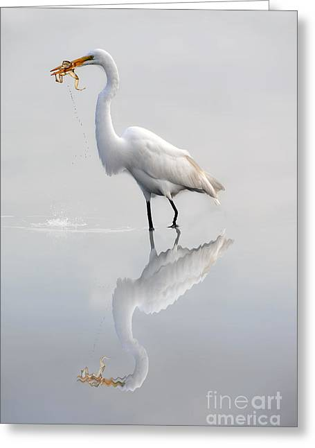 Greeting Card featuring the photograph Egret Eating Lunch by Dan Friend