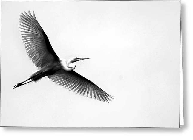 Egret Elegance Greeting Card by Skip Willits