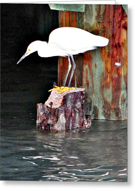 Greeting Card featuring the photograph Egret Fishing by John Collins