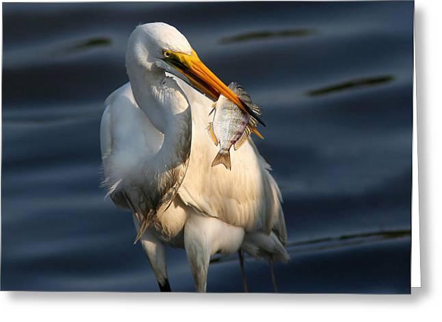 Egret Fishing Greeting Card by Phil Lanoue