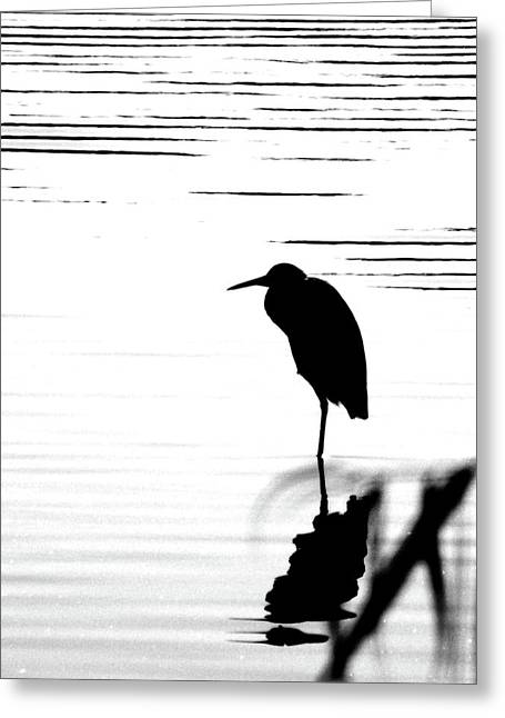 Greeting Card featuring the photograph Egret  by Lizi Beard-Ward