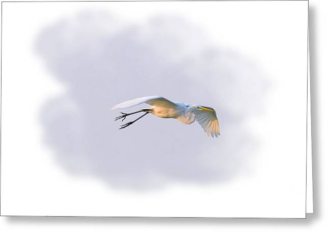 Egret Morning Fly Greeting Card