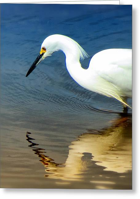 Egret Reflected Greeting Card by Diane Wood