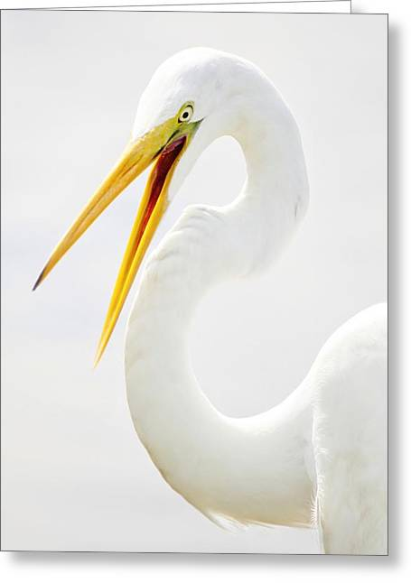 Egret Up Close Greeting Card by Paulette Thomas