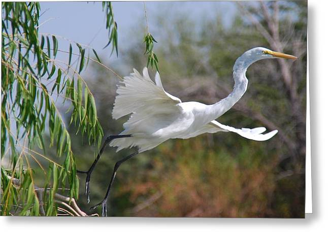 Greeting Card featuring the photograph Egret's Flight by Tam Ryan