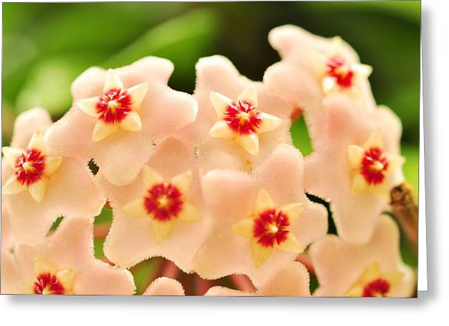 Greeting Card featuring the photograph Eis A Hoya by Puzzles Shum