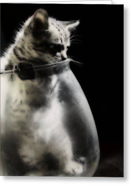Greeting Card featuring the photograph El Kitty by Jessica Shelton